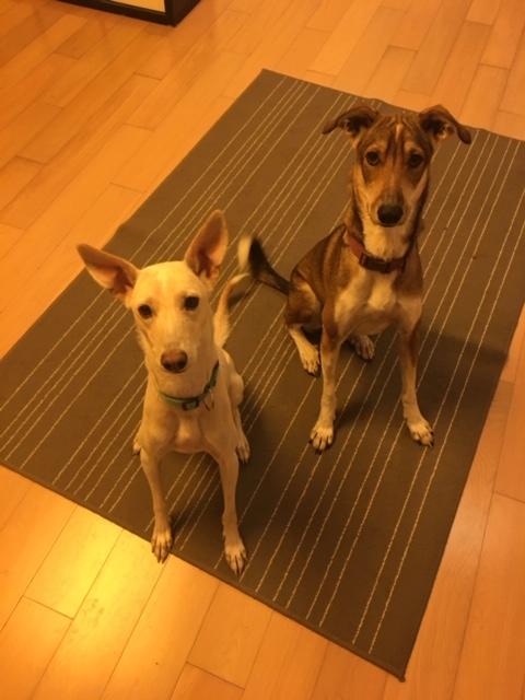 Rüde Lucky und Hundemädel Luna suchen neues Zuhause