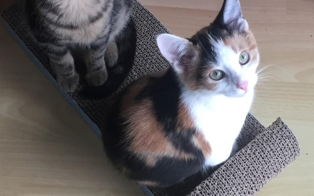 Katzenkinder Freya und Finn