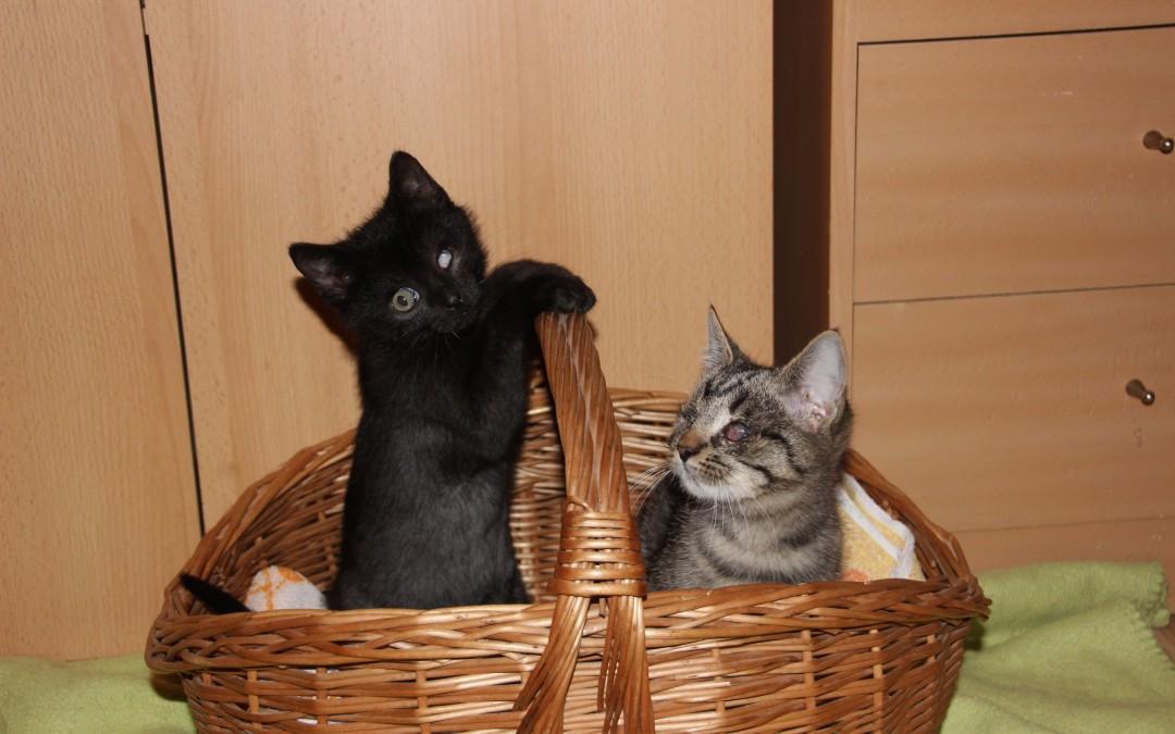 Kiki und Leo – zwei ganz spezielle Katzenkinder