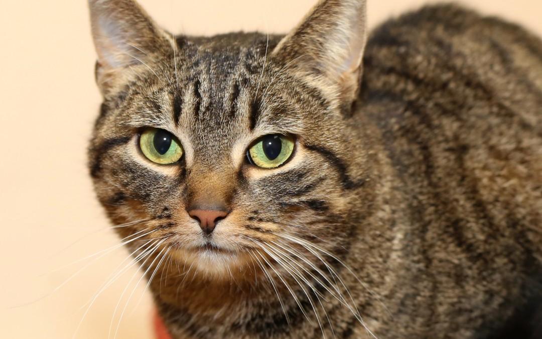 Katze Schmusi – sucht dringend neues Zuhause
